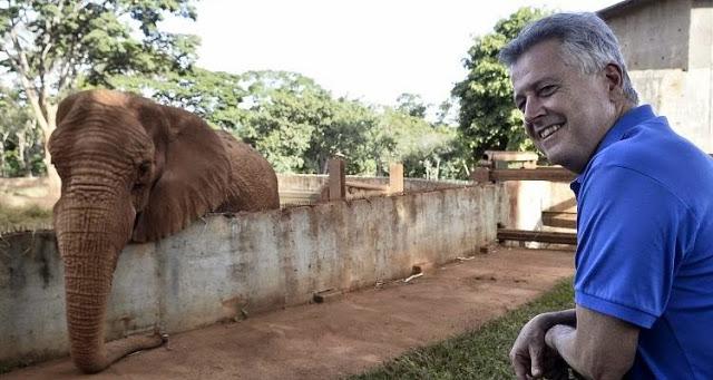 elefante - Problema do tamanho do elefante