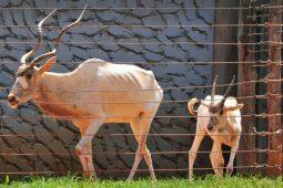 Empresa será contratada para cuidar de animais do Zoo