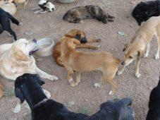 fauna flora abrigo cães radio corredor 227x170 - Que tal começar o ano ajudando uma causa?