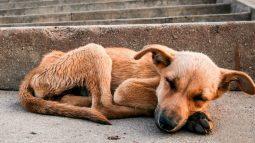 Humano está maltratando menos os animais, segundo GDF