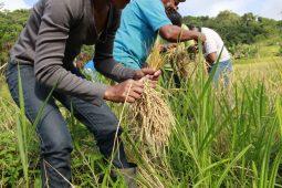 Brasil e México: vai arroz e vem feijão