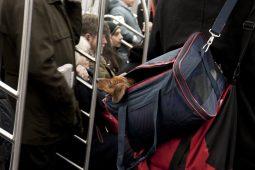 Lei vai permitir bicho de estimação no transporte público do DF (Foto: reprodução da internet)