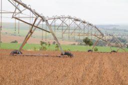 Read more about the article O recorde da agricultura (que não é vilã)