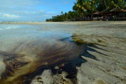 Emergência ambiental por óleo no Nordeste