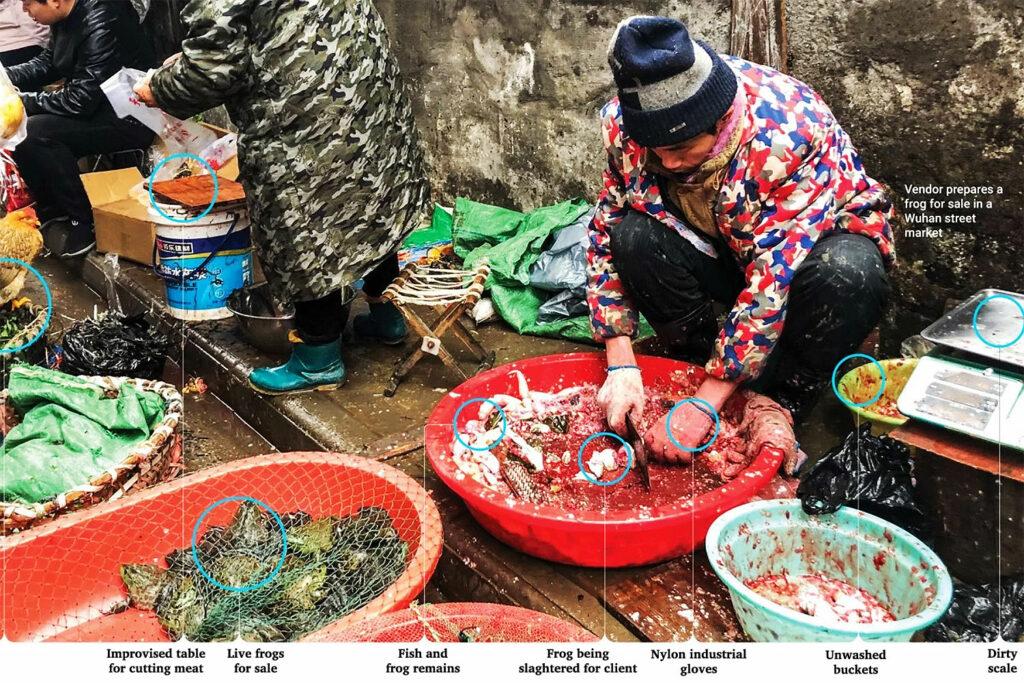chinaaa 1024x683 - Porque os animais selvagens são um ingrediente-chave no surto de coronavírus na China