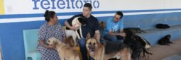 Read more about the article Microchip para cães e gatos