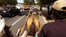 Read more about the article Cadastramento de Condutores de Veículos de Tração Animal no DF