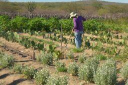 Read more about the article Terras rurais: Distritais aprovam em 1º turno projeto para regularização