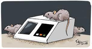 A volta dos ratos