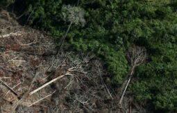 Read more about the article Desmatamento ilegal